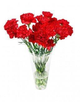 Bouquet of 15 red dianthus | Gerbera,alstroemerias,carnations to colleague flowers