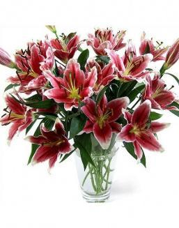 Bouquet of 51 pink lilies | Delivery and order flowers in Almaty
