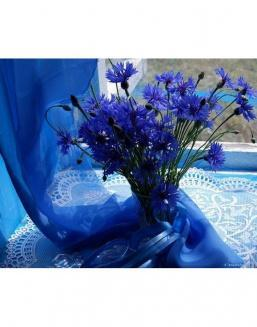 Bouquet of 25 cornflowers | Cornflowers