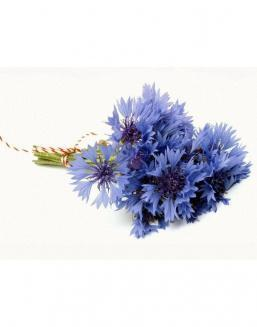 Bouquet of 15 cornflowers | Cornflowers