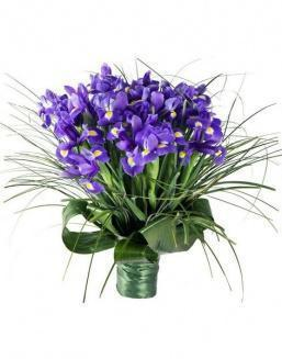 Bouquet of 15 iris flowers | Flowers for Birthday flowers