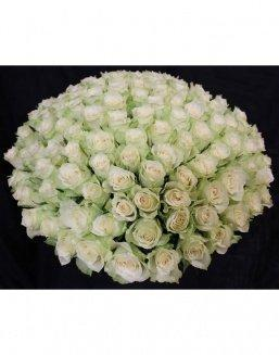 Bouquet of 101 white holland roses | White roses flowers