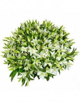 Bouquet of51 white lilies | Flowers for Birthday flowers